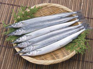 瀬戸の白銀細魚 サヨリ